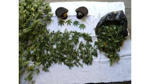 marijuana sequestrata a sant'angelo in vado