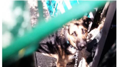 Cani a catena, 35 liberati dalle guardie zoofile dell'OIPA di Pesaro Urbino nel 2018
